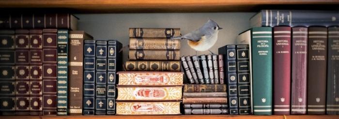 bibliografia-especismo